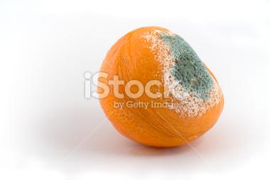 http://i.istockimg.com/file_thumbview_approve/5403084/2/stock-photo-5403084-rotten-tangerine.jpg