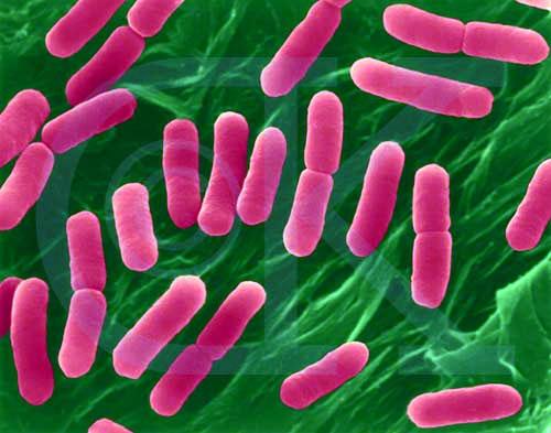Prokaryotic cell division