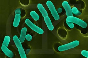 245_e-coli