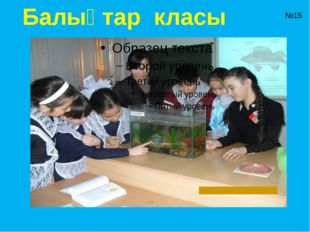 Балықтар класы №15