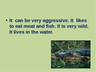 It can be very aggressive. It likes to eat meat and fish. It is very wild. I