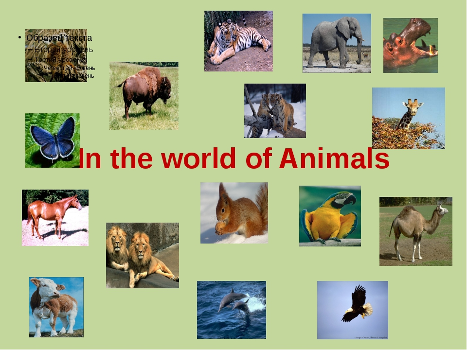 In the world of Animals