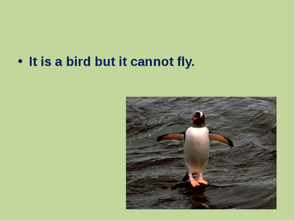 It is a bird but it cannot fly.