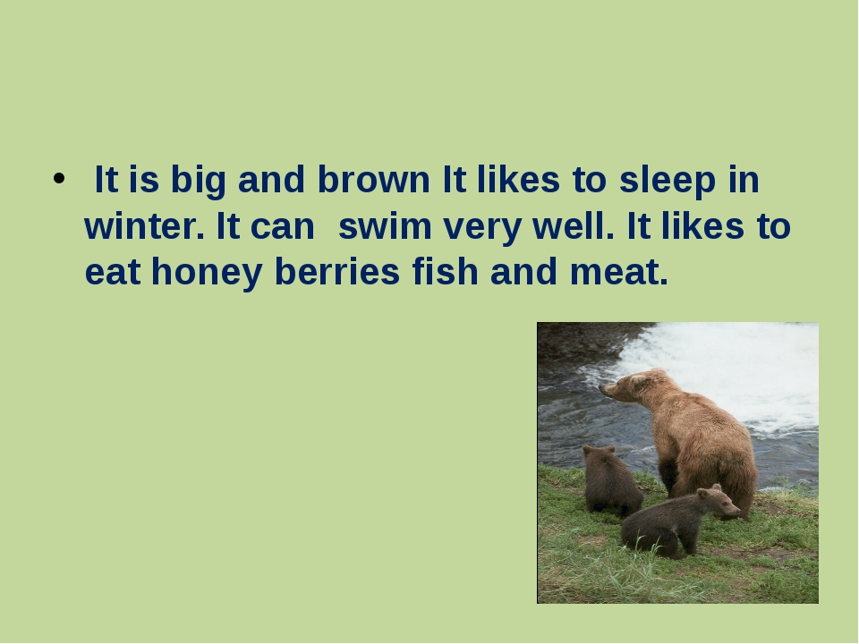 It is big and brown It likes to sleep in winter. It can swim very well. It l...
