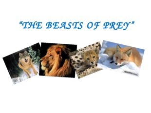 """""""THE BEASTS OF PREY"""""""