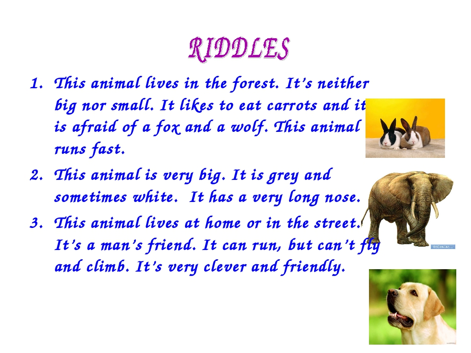 This animal lives in the forest. It's neither big nor small. It likes to eat...