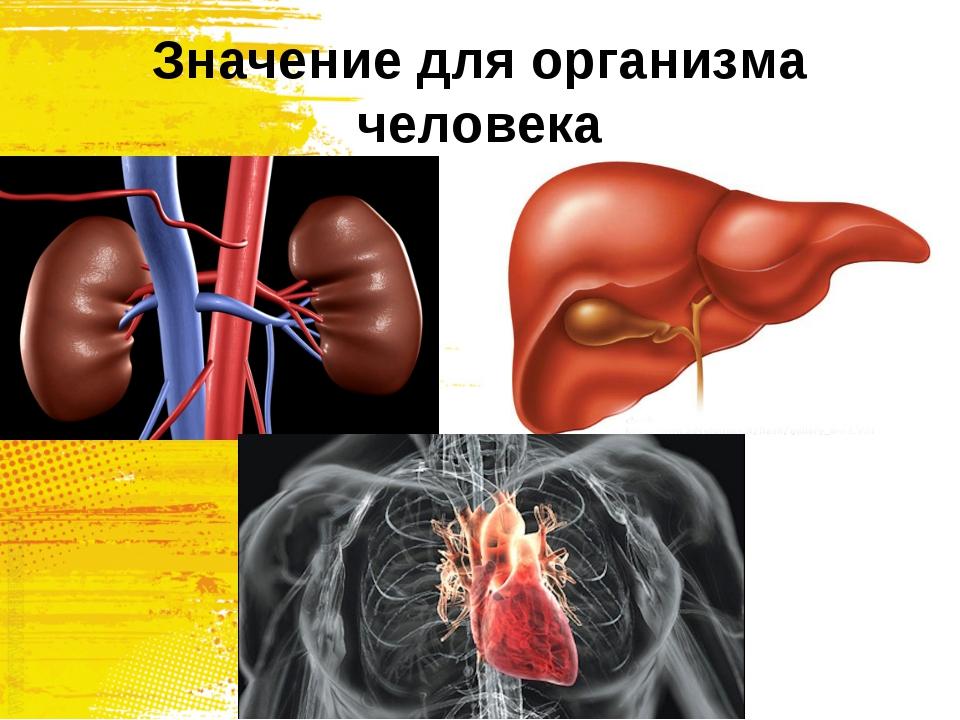 Значение для организма человека
