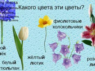 Какого цвета эти цветы? голубой василёк белый тюльпан жёлтый лютик фиолетовые