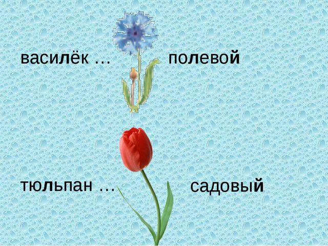 василёк … тюльпан … полевой садовый