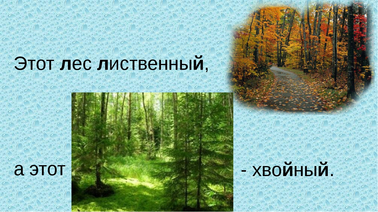 Этот лес лиственный, а этот - хвойный.