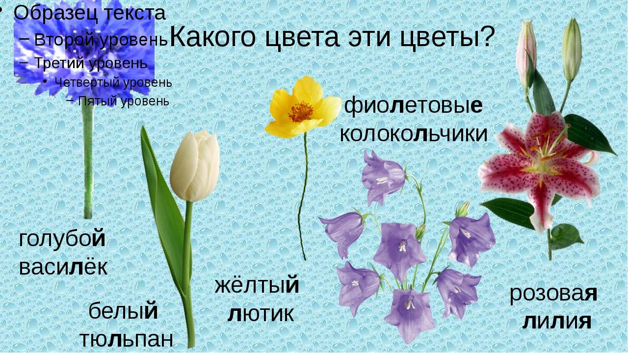 Какого цвета эти цветы? голубой василёк белый тюльпан жёлтый лютик фиолетовые...