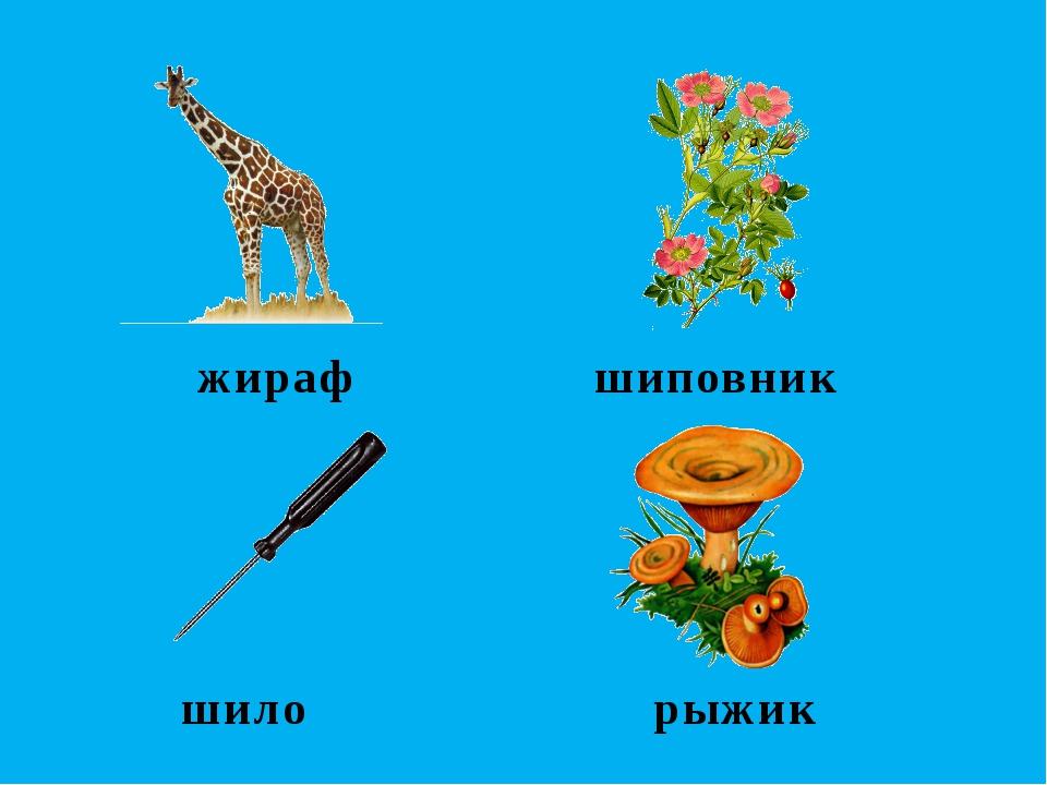 жираф шиповник шило рыжик