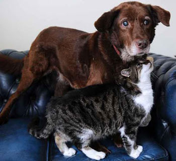 Кошка поводырь помогает собаке. потерявшей зрение