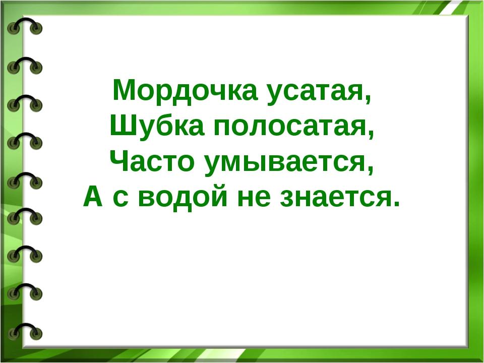 Мордочка усатая, Шубка полосатая, Часто умывается, А с водой не знается.