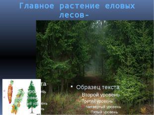 Главное растение еловых лесов- ель европейская