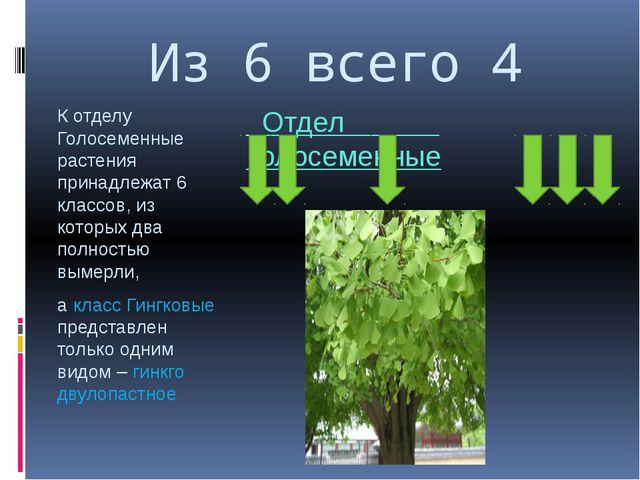 Из 6 всего 4 К отделу Голосеменные растения принадлежат 6 классов, из которых...