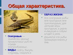 Общая характеристика. Осетровые — семейство ценных промысловых рыб из отряда