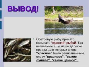 """ВЫВОД! Осетровую рыбу принято называть """"красной"""" рыбой. Так назвали ее еще на"""