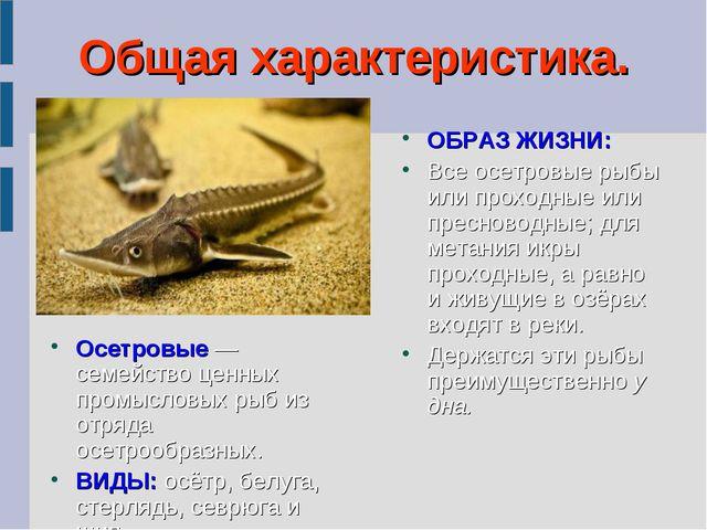 Общая характеристика. Осетровые — семейство ценных промысловых рыб из отряда...