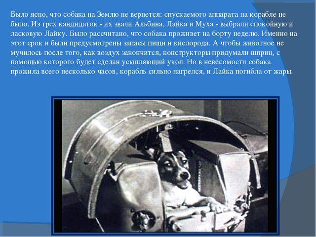 Было ясно, что собака на Землю не вернется: спускаемого аппарата на корабле н...