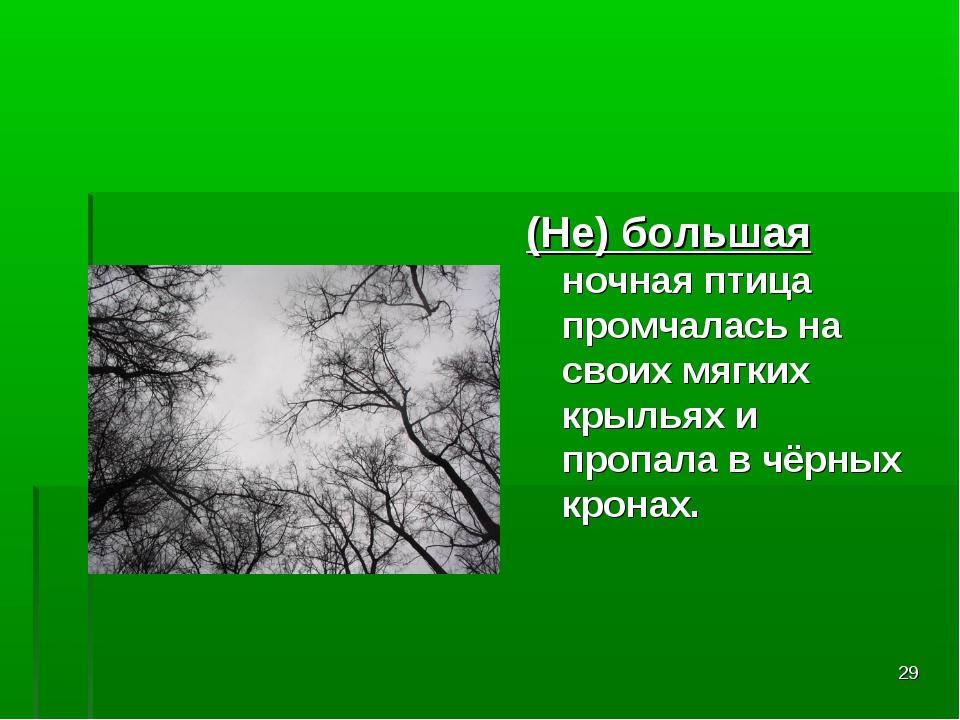 * (Не) большая ночная птица промчалась на своих мягких крыльях и пропала в чё...