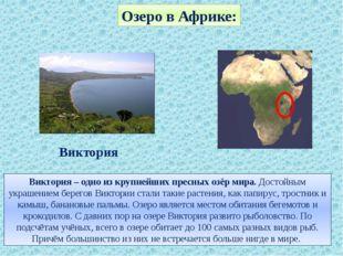 Озеро в Африке: Виктория – одно из крупнейших пресных озёр мира. Достойным ук