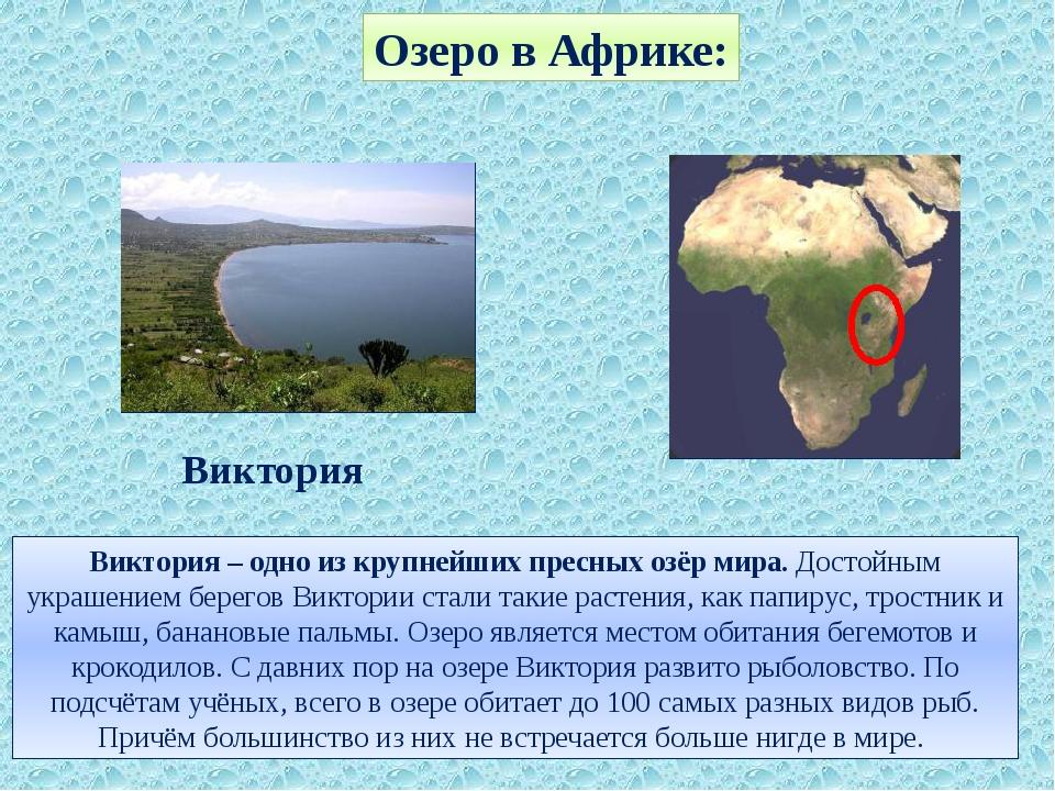 Озеро в Африке: Виктория – одно из крупнейших пресных озёр мира. Достойным ук...