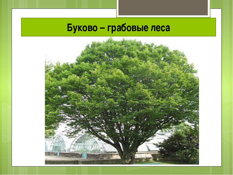 Буково – грабовые леса