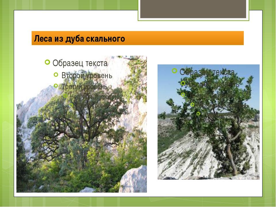 Леса из дуба скального