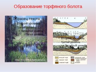 Образование торфяного болота