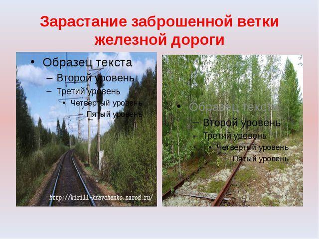 Зарастание заброшенной ветки железной дороги