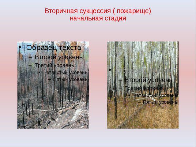 Вторичная сукцессия ( пожарище) начальная стадия