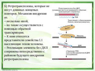 Б) Ретротранспозоны, которые не несут длинных концевых повторов. Механизм вне