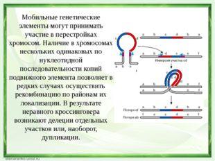 Мобильные генетические элементы могут принимать участие в перестройках хромос