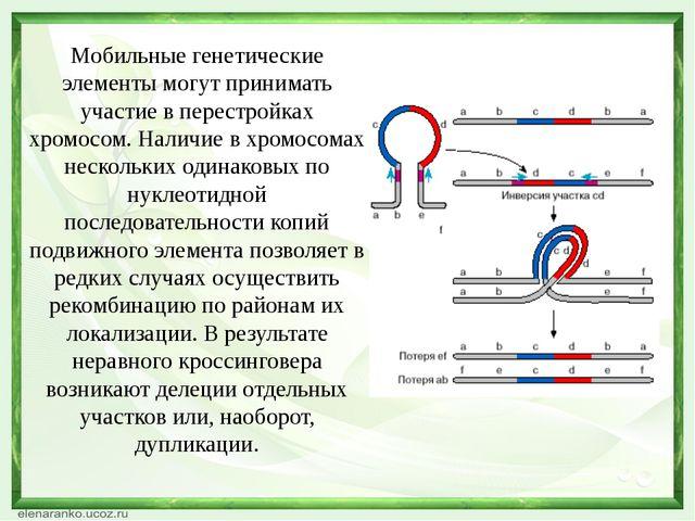 Мобильные генетические элементы могут принимать участие в перестройках хромос...
