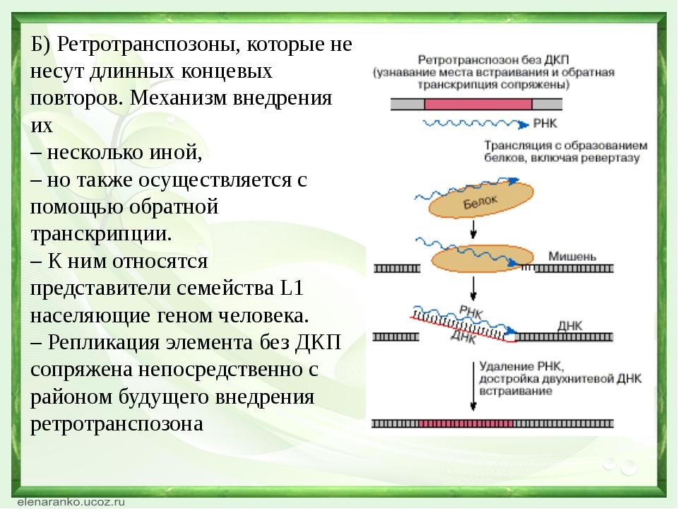Б) Ретротранспозоны, которые не несут длинных концевых повторов. Механизм вне...