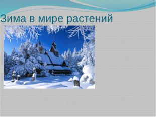Зима в мире растений