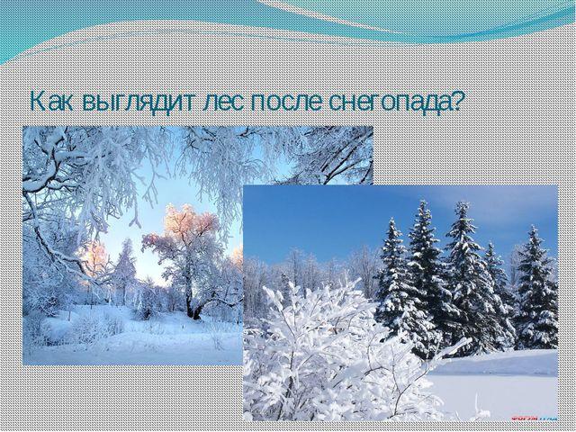 Как выглядит лес после снегопада?
