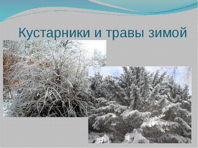 Кустарники и травы зимой