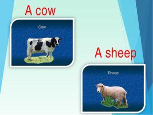 A cow A sheep