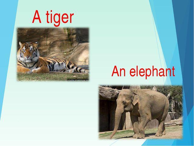 A tiger An elephant