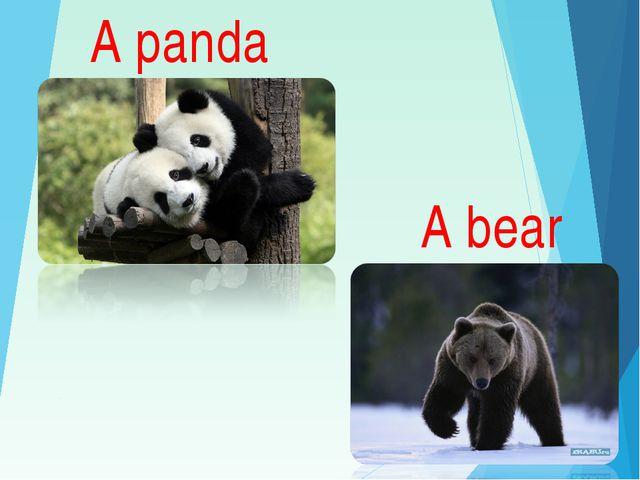 A panda A bear
