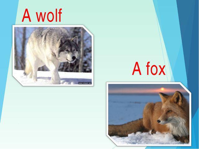 A wolf A fox