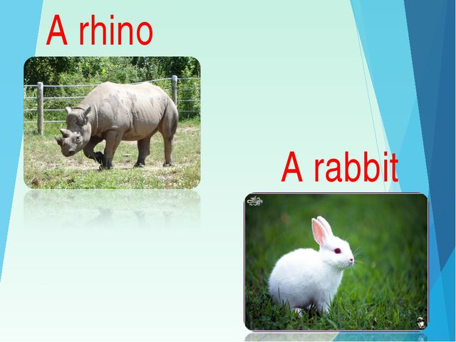 A rhino A rabbit