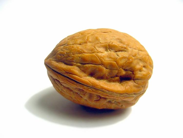 http://www.freakingnews.com/images/app_images/walnut-1.jpg
