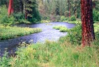 http://www.fs.fed.us/wildflowers/regions/pacificnorthwest/MetoliusRiver/images/metolius_river_pine.jpg