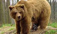 http://www.auto.gorodovoy.spb.ru/m/auto/news/200x500/_CImEoW.jpg