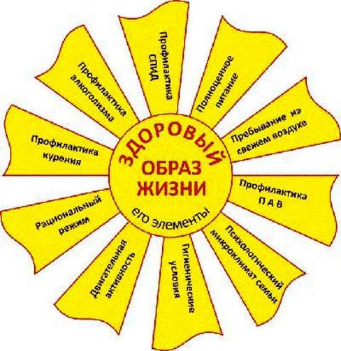 http://kuzenkovd.ru/wp-content/uploads/2012/09/colnze-zoj_.jpg