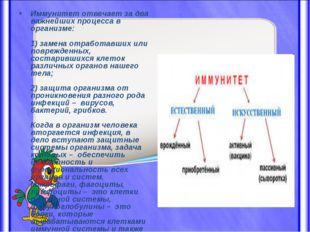 Иммунитет отвечает за два важнейших процесса в организме: 1) замена отработав