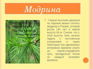 Модрина Самым высоким деревом на Украине можно считать модрину в Рахове, кот